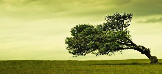 albero_vento